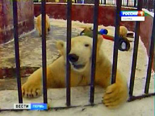 ロシア・ウラル地方、ペルミ動物...