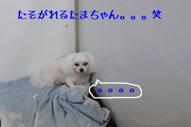 b0130018_16192028.jpg