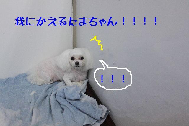 b0130018_16192945.jpg