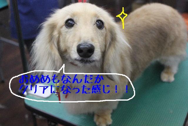 b0130018_16253263.jpg