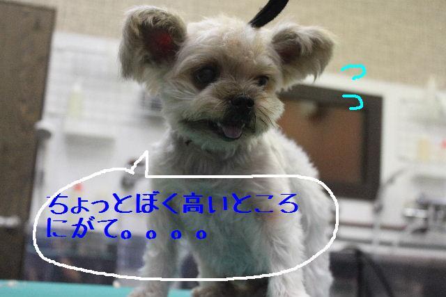 b0130018_1711979.jpg