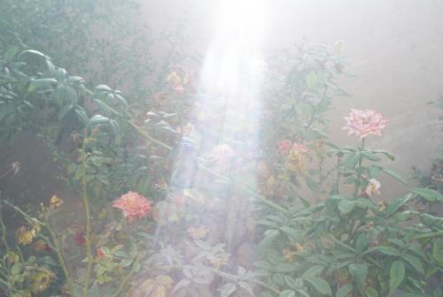 『夜と霧』より _b0212922_22421308.jpg