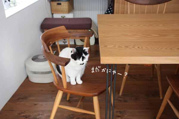 yoikoさんが遊びに来てくれました♪その3?_b0223446_11575257.jpg