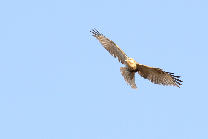 ★クロガモ飛来/先週末の鳥類園(2014.1.11~13)_e0046474_20394985.jpg