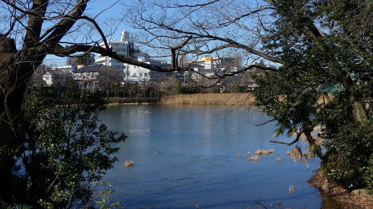 【 日記 2014 1/16 (木) 】 鳩も凍りつきました!_a0185081_14555552.jpg