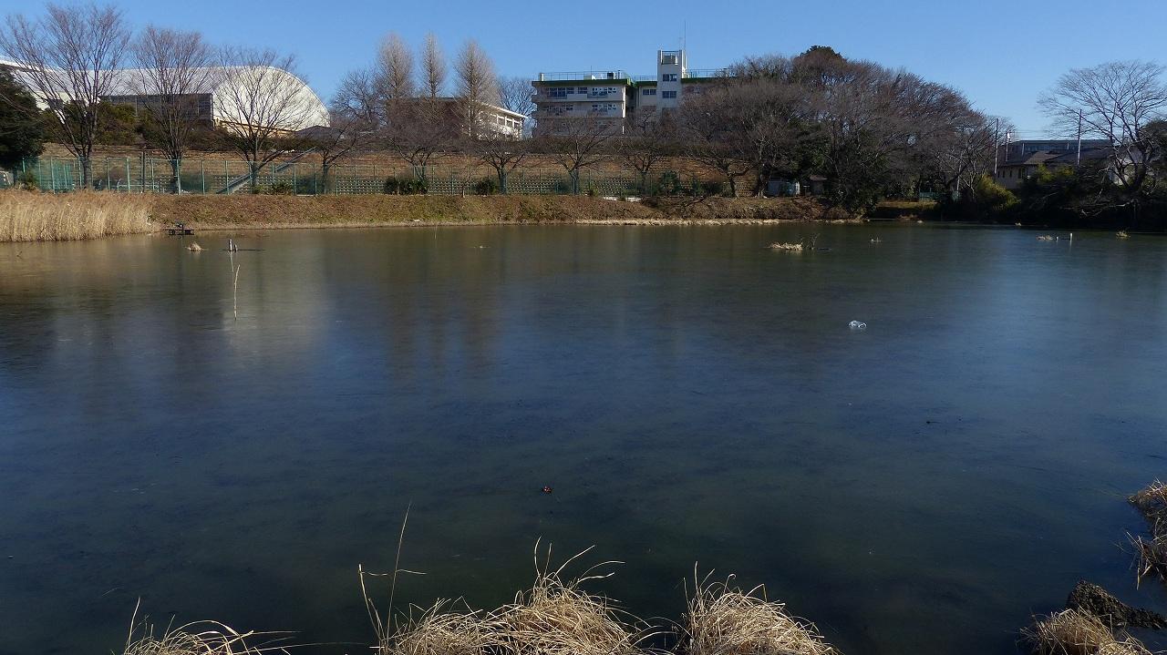 【 日記 2014 1/16 (木) 】 鳩も凍りつきました!_a0185081_14561675.jpg