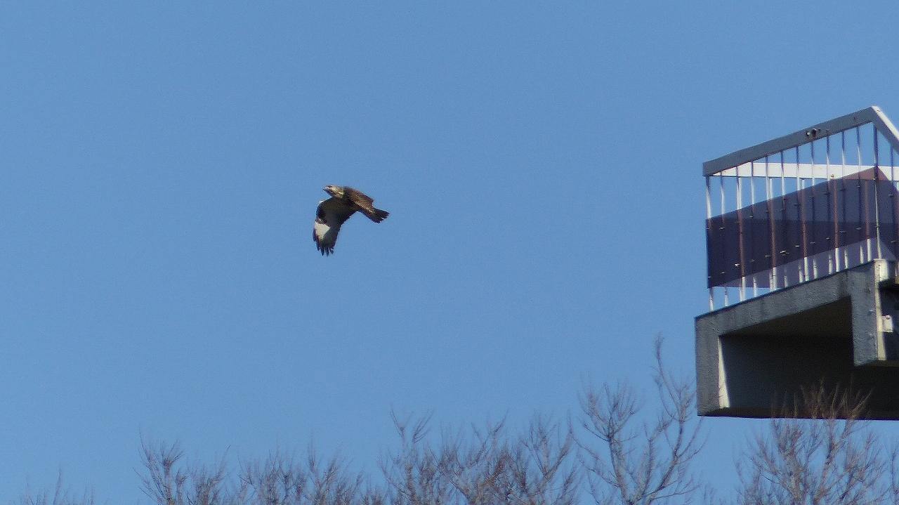 【 日記 2014 1/16 (木) 】 鳩も凍りつきました!_a0185081_1457022.jpg