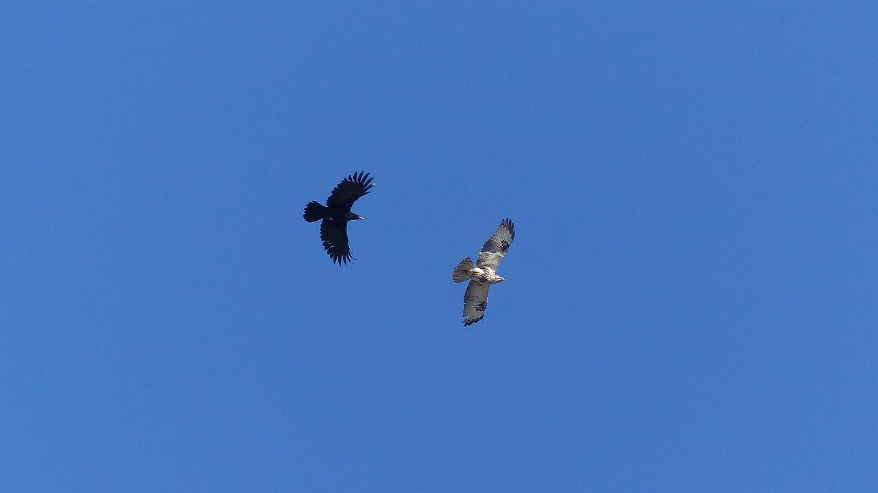 【 日記 2014 1/16 (木) 】 鳩も凍りつきました!_a0185081_14581670.jpg