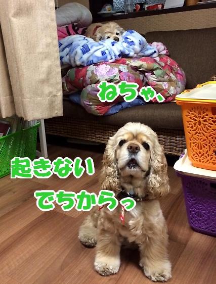 b0067012_1401483.jpg