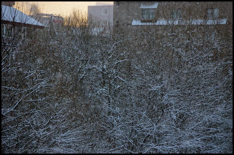 氷点下10度の日の出_b0019313_17331987.jpg
