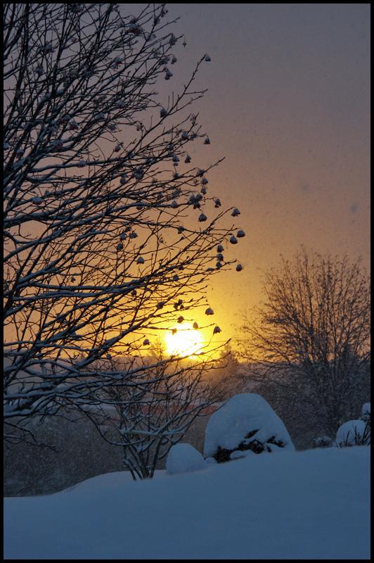 氷点下10度の日の出_b0019313_1733385.jpg