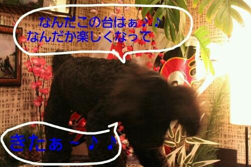 b0130018_15543981.jpg