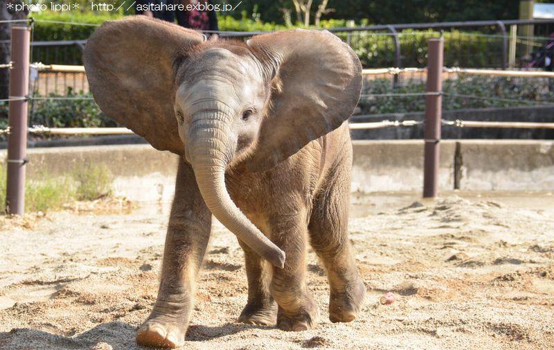 アフリカゾウ誕生  家族になる日を夢見て_b0024758_0333327.jpg