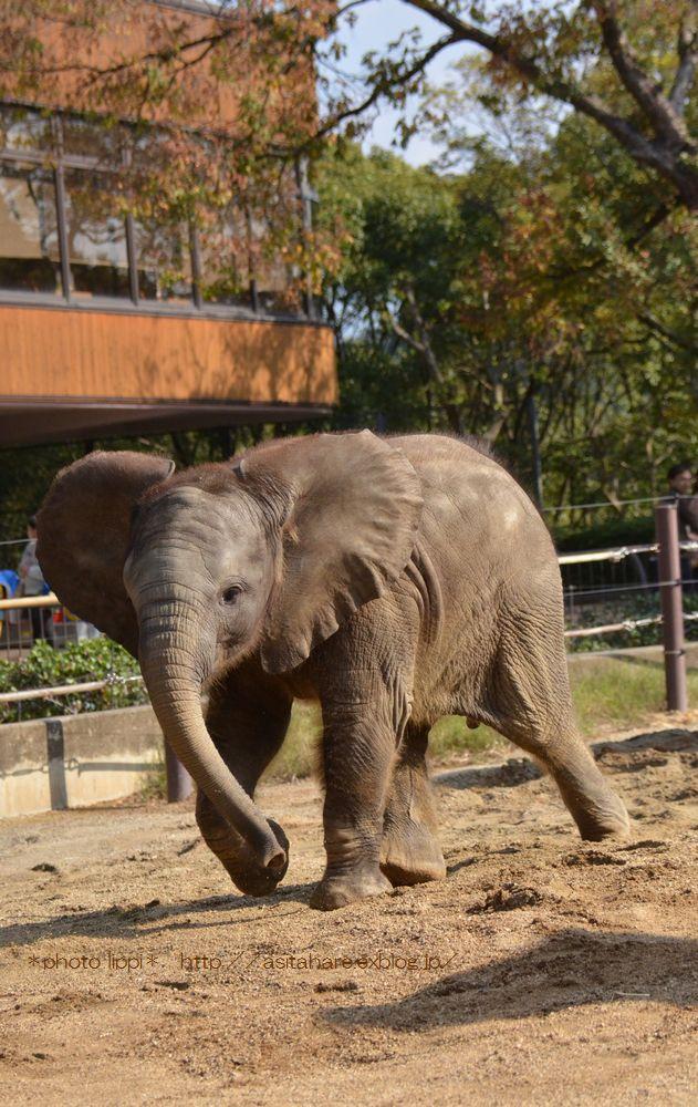 アフリカゾウ誕生  家族になる日を夢見て_b0024758_0351066.jpg