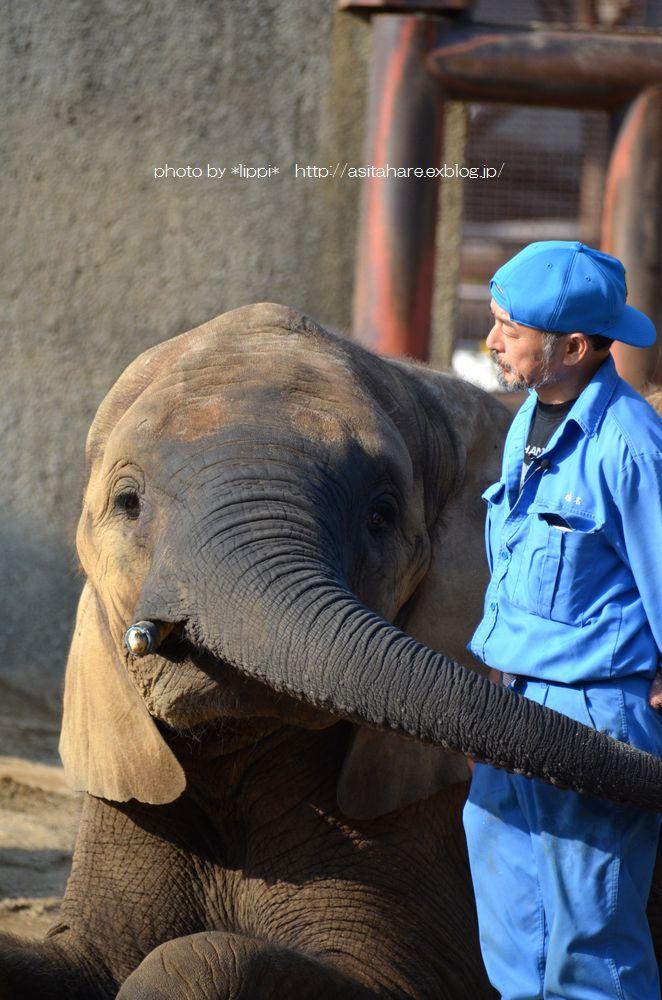 アフリカゾウ誕生  家族になる日を夢見て_b0024758_0381095.jpg
