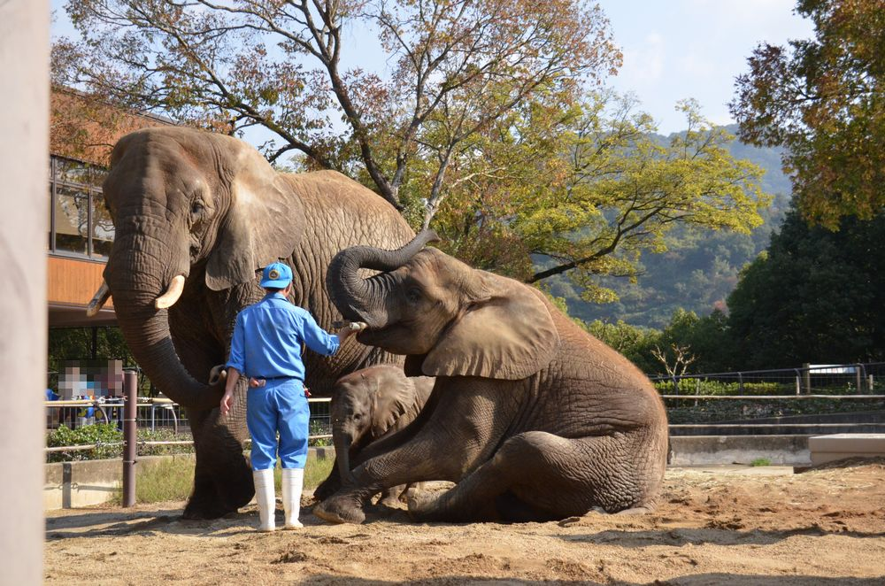 アフリカゾウ誕生  家族になる日を夢見て_b0024758_0401786.jpg