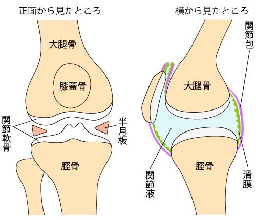 変形性膝関節症について~膝の構造はどうなっているの?_a0296269_11252120.jpg