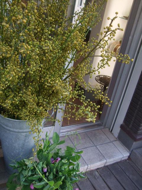 オークリーフ(透明感のある色の花たち)_f0049672_17154934.jpg
