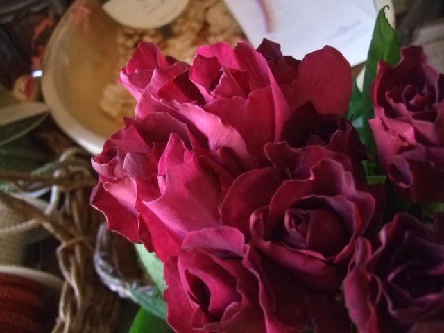 オークリーフ(透明感のある色の花たち)_f0049672_1724664.jpg