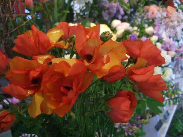 オークリーフ(透明感のある色の花たち)_f0049672_17294290.jpg