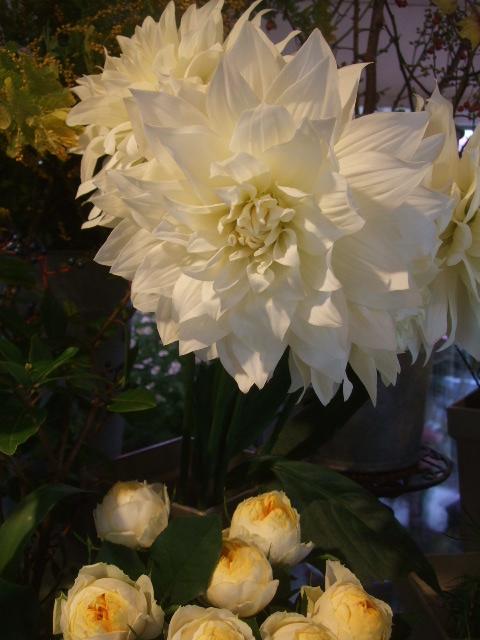 オークリーフ(透明感のある色の花たち)_f0049672_17295235.jpg