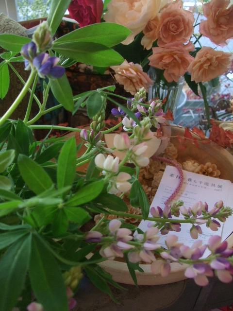 オークリーフ(透明感のある色の花たち)_f0049672_17302252.jpg