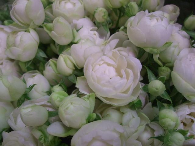 オークリーフ(透明感のある色の花たち)_f0049672_17311467.jpg