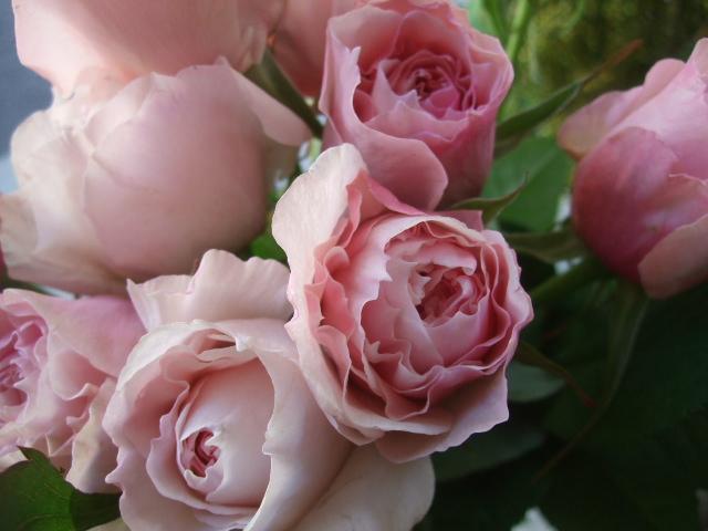 オークリーフ(透明感のある色の花たち)_f0049672_17312140.jpg