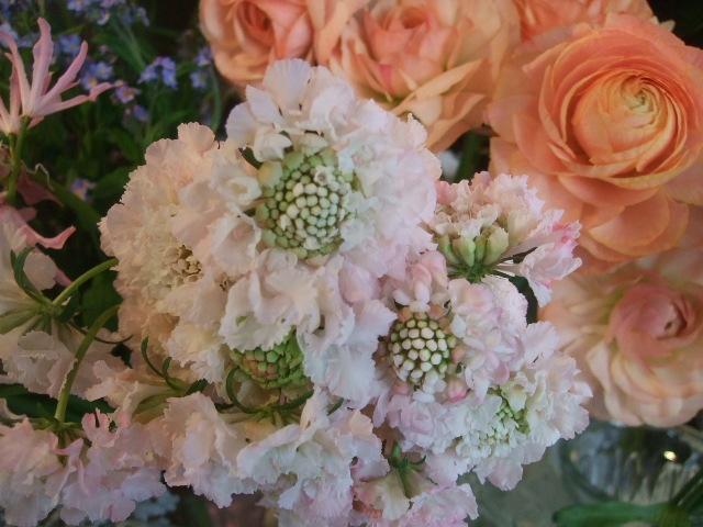 オークリーフ(透明感のある色の花たち)_f0049672_17313328.jpg