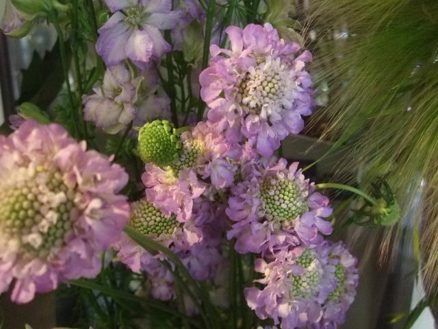 オークリーフ(透明感のある色の花たち)_f0049672_17314062.jpg