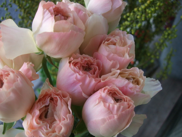 オークリーフ(透明感のある色の花たち)_f0049672_17314614.jpg