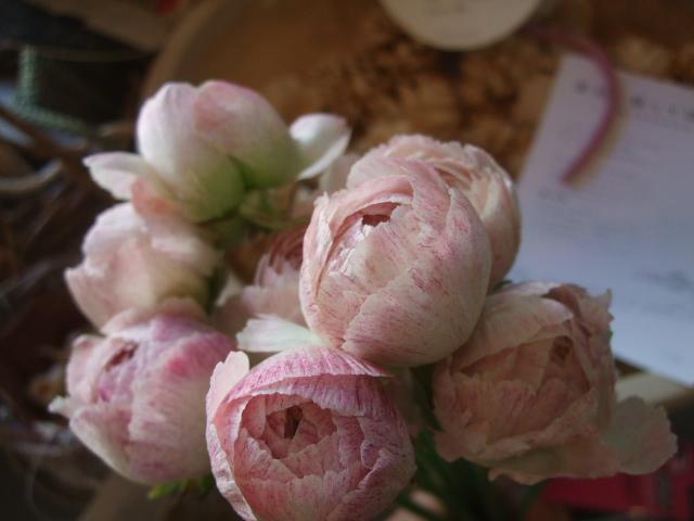 オークリーフ(透明感のある色の花たち)_f0049672_1731537.jpg