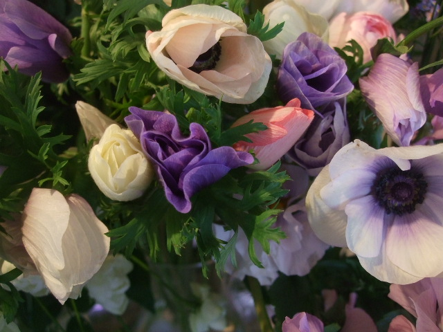 オークリーフ(透明感のある色の花たち)_f0049672_17321875.jpg