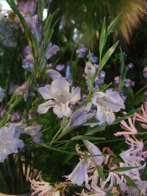 オークリーフ(透明感のある色の花たち)_f0049672_17322543.jpg