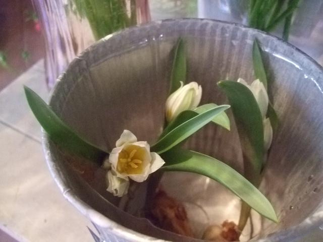 オークリーフ(透明感のある色の花たち)_f0049672_17355086.jpg