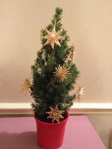 Christmas TreeとGingerbread_f0238789_20301794.jpg
