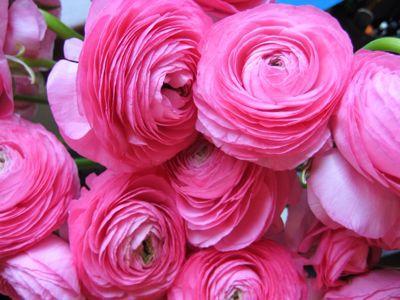 Flower_a0167912_16251353.jpg