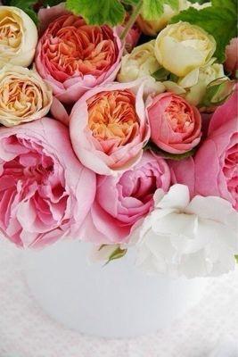 Flower_a0167912_16251574.jpg