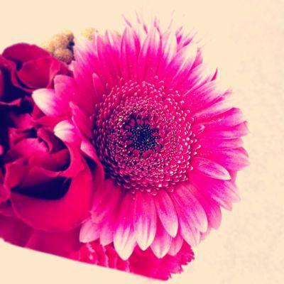 Flower_a0167912_16251848.jpg