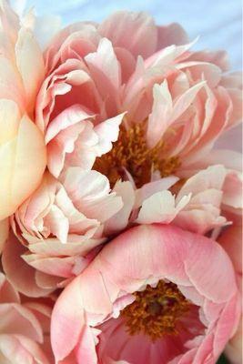 Flower_a0167912_1625201.jpg