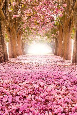 Flower_a0167912_16252471.jpg