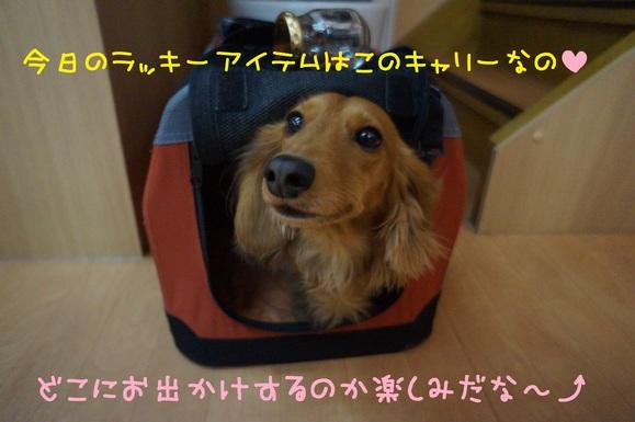 d0220513_18401437.jpg
