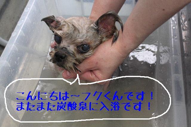 b0130018_1555153.jpg