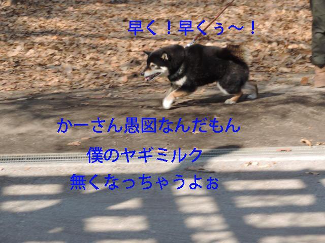 b0203018_17332663.jpg