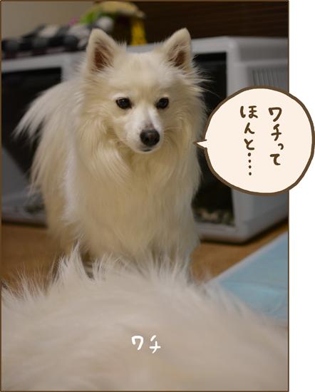 d0212419_2010550.jpg