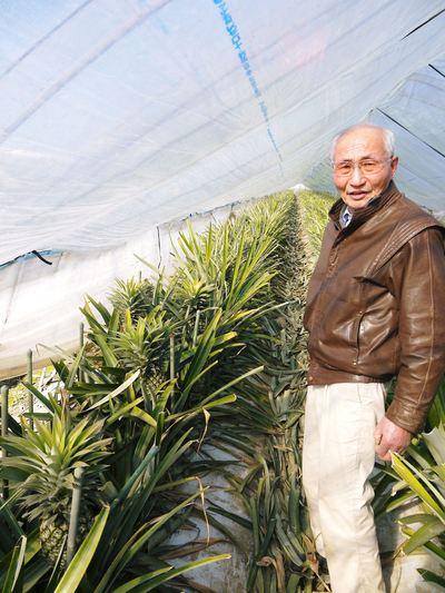 熊本産パイナップル!その2「パイナップルの花と収穫のお話」_a0254656_17245550.jpg
