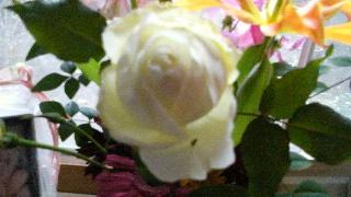 d0299559_1584842.jpg