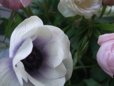 オークリーフ(薔薇とアネモネのアレンジメント)_f0049672_16471320.jpg