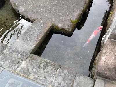 おとなりの湧水地 + 温泉_b0228113_15422336.jpg