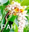 PAHに対する経口トレプロスチニルの有効性_e0156318_9102283.jpg